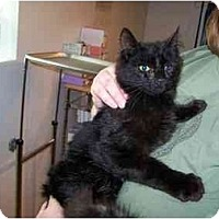 Adopt A Pet :: Silkie - Syracuse, NY