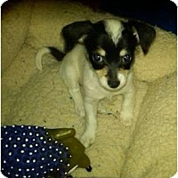 Adopt A Pet :: Dottie - Lake Forest, CA