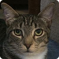 Adopt A Pet :: Chad - Winchester, CA