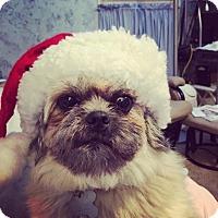 Adopt A Pet :: Pearl - Carey, OH
