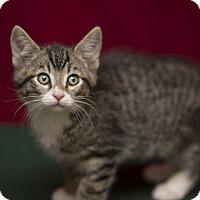 Adopt A Pet :: Tony - Fountain Hills, AZ