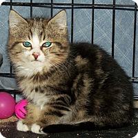 Adopt A Pet :: Zeke - Fort Wayne, IN