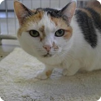 Adopt A Pet :: Bindi Sue - East Smithfield, PA