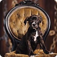 Adopt A Pet :: Michael - Portland, OR