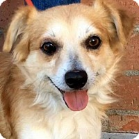 Adopt A Pet :: MYLES (video) - Los Angeles, CA
