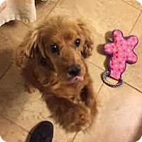 Adopt A Pet :: Cutie - Parker, CO