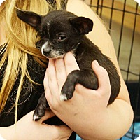 Adopt A Pet :: Romeo - Rancho Cucamonga, CA