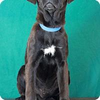 Adopt A Pet :: Sid - Waldorf, MD