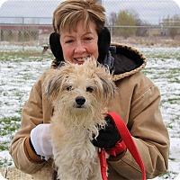 Adopt A Pet :: Brody - Elyria, OH