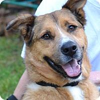 Adopt A Pet :: Preacher - Enfield, CT