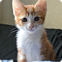 Adopt A Pet :: Arlo - Mission Viejo, CA