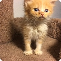 Adopt A Pet :: Jaime - Los Angeles, CA