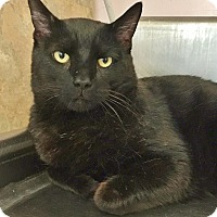 Adopt A Pet :: Cecil - Salisbury, MA