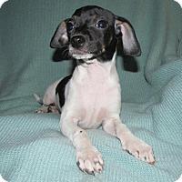 Adopt A Pet :: Peach - Ball Ground, GA
