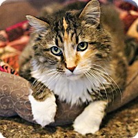 Adopt A Pet :: Loretta - Lincoln, NE