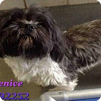 Adopt A Pet :: VENICE - San Antonio, TX