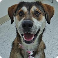 Adopt A Pet :: Theodore - Chambersburg, PA