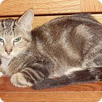 Adopt A Pet :: Alex - Evans, WV