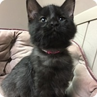 Adopt A Pet :: Guppie - Medina, OH