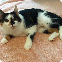 Adopt A Pet :: Ember 2 - Bulverde, TX