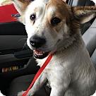 Adopt A Pet :: Babs