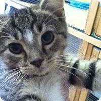 Adopt A Pet :: Merlin - Shippenville, PA
