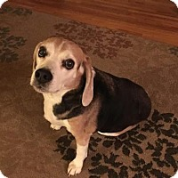 Adopt A Pet :: Leopold - Princeton, MN