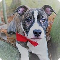 Adopt A Pet :: Tigger - Waupaca, WI