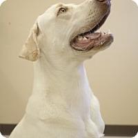 Adopt A Pet :: Brandon - Laredo, TX