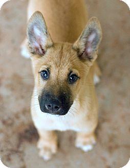 Quiz | Adopted Puppy | Greensboro, GA | Belgian Malinois ...