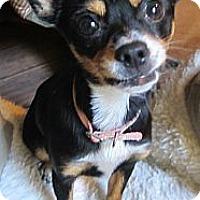 Adopt A Pet :: Moca - Warwick, NY