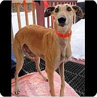 Adopt A Pet :: Bethany - N. BABYLON, NY