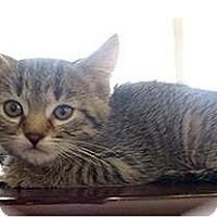 Adopt A Pet :: Fate - Montgomery, IL