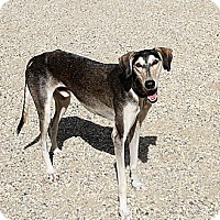 Adopt A Pet :: Shogun - Santa Rosa, CA