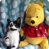 Adopt A Pet :: Frankie - Union, KY