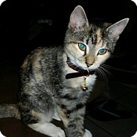 Adopt A Pet :: Michelle my Belle - McDonough, GA