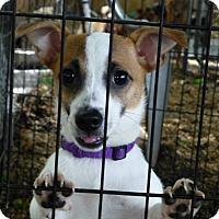 Adopt A Pet :: Ruby - Wyanet, IL
