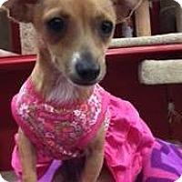 Adopt A Pet :: LUCY LUISA - Phoenix, AZ