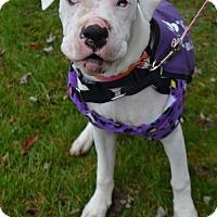 Adopt A Pet :: Blanche - Buffalo, NY