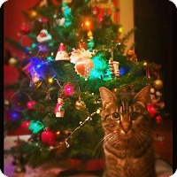 Adopt A Pet :: Lily - St. Louis, MO
