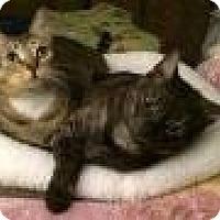 Adopt A Pet :: Adonis & Venus - Sherman Oaks, CA