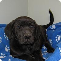 Adopt A Pet :: Brutus - Groton, MA