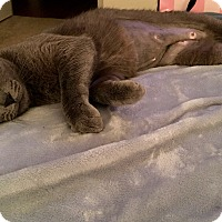 Adopt A Pet :: Iris - Keller, TX
