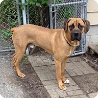 Adopt A Pet :: Wrigley - Westville, IN
