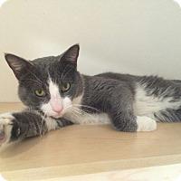 Adopt A Pet :: Tom - San Francisco, CA