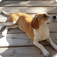 Adopt A Pet :: Fresca - San Antonio, TX