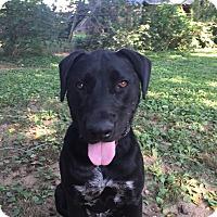 Adopt A Pet :: Ciaran - Nashville, TN