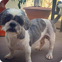 Adopt A Pet :: Napoleon - Irvine, CA