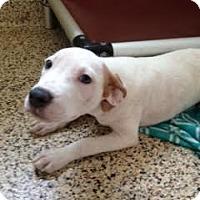 Adopt A Pet :: Ginger - Aiken, SC