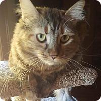Adopt A Pet :: Ariel Apéritif - Phoenix, AZ